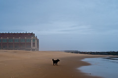 dog and god (nosha) Tags: ocean new blue winter sea usa dog brown beach beautiful beauty photography newjersey sand waves god grove nj og shore jersey jerseyshore beau lightroom 2011 oceangrovenj nosha 45mmf28 nikond300 asburyparknewjerseyusa