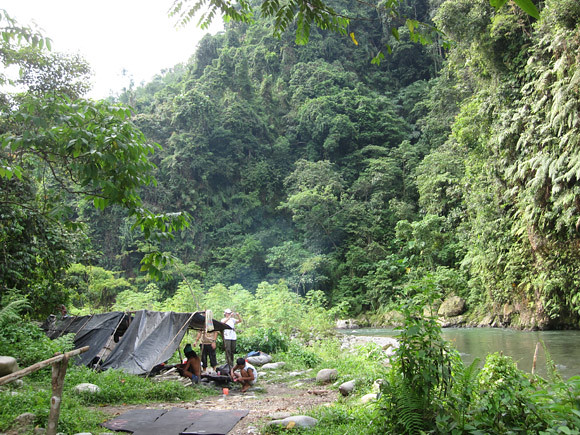 Sumatra Orangutan Camp