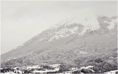 where eagles dare (A) Tags: wood mountain snow fog clouds nikon nuvole neve nebbia montagna abruzzo bosco d90 nikond90
