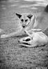 (Yuricka Takahashi) Tags: nikon mg cachorro takahashi horizonte belo d90 yuricka