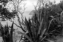 Cinque Terre (La minina) Tags: italy nationalpark italia liguria bn cinqueterre rockycoastline giornatauggiosa fotografiaanalogica gettyimagesitalyq1 tracornigliaemanarola