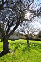 Petaluma, California Scenery - December 2010