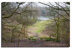 TAKE A PEEK THROUGH THE TREES (vicki127.) Tags: trees water grass cheshire canon300d earth branches soil daffodils lymm digitalcameraclub lymmdam flickraward ilovemypics march2011 adobephotoshopcs5 ringofexcellence vickiburrows vicki127