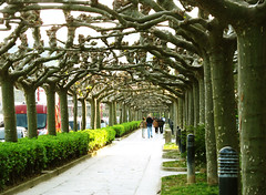 Plane Tree Tunnel in the Evening Sun (Batikart) Tags: city travel trees sunset vacation sky people urban sun ho