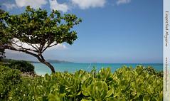Lanikai Beach, Oahu Hawaii (Scrumptious Venus) Tags: travel beach magazine hawaii oahu guide polynesian hawaiianbeaches windwardcoast southeastoahu paradisiacalbeaches paradisiacbeach lespritsudmagazine thewindwardcoast