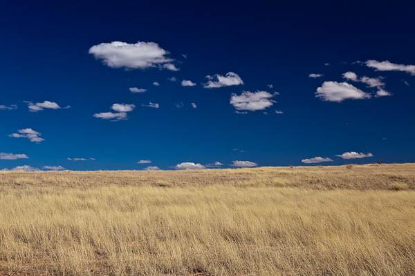 Grasslands