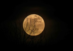 2011-03-19 supermoon (daviddobson77) Tags: moon fuji nightshots solareclipse tonightsmoon moonwatch moonpictures hs10 lunartics sacredmoon supermoon fujifilmhs10 19032011