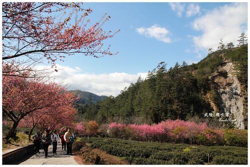 2011-03-04 陽明武陵 251 r