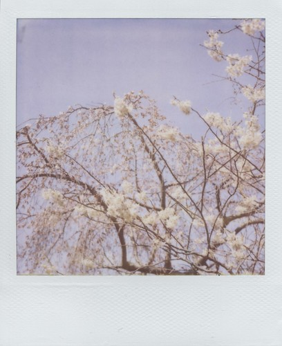 haze of sakura (2011)