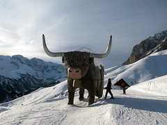 buffalo  (cyberjani) Tags: winter italy snow ski mountains alps explore dolomiti flickraward