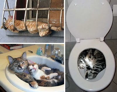 organize_your_cats_29