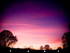 Purple Sunset (KJGarbutt) Tags: park city uk trees sunset england sky sun tree london clouds photoshop altered photography chelsea purple photoshopped sony cybershot adobe hydepark kensington kurtis tweaked nottinghill kensingtonpalace sonycybershot lightroom picassa orangery kensingtonandchelsea garbutt rbkc kjgarbutt kurtisgarbutt kurtisjgarbutt kjgarbuttphotography