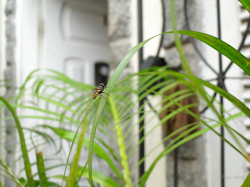 Eu sou a mosca que pousou na sua sopa by TevoMota