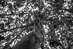 Tronc et Liane (La photo & moi....) Tags: nature arbre noir et blanc liane hauteur