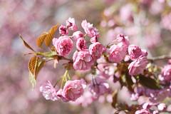 Spring (-*Marie*-) Tags: nyc new york city usa