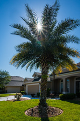 Florida Home Landscaping (Harold Brown) Tags: building florida flowersplants haroldbrown house jax jacksonville morning outdoor palm plant sky sonynex6 spring travel tree usa bhagavideocom haroldbrowncom harolddashbrowncom photosbhagavideocom