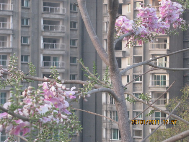 Flowers and Towers of Sangria Megapolis from Man Road - Megapolis on 26th January 2011