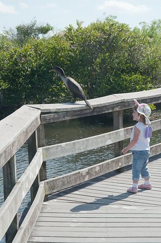 Everglades-18