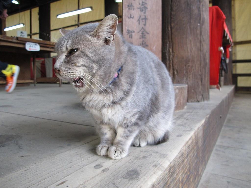 智恩寺の猫