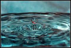 Drip Drop (Mamooli) Tags: macro canon drops drop drip droplet 100 splash f56 waterdrops tamron 18200 fired on tamron18200mmf3563 tamron18200 tamronaf18200mmf3563 0005sec1200 1000d canoneos1000d eos100d dropletsplash