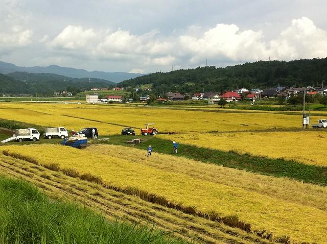 稲刈り風景のフリー写真素材