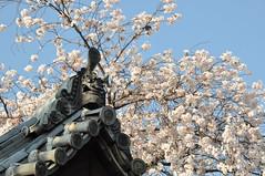 Hirakata-shi (araiguma.10.13) Tags: d90  1685mm