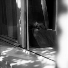 The sad destiny of an end-strip photo... (Piorkshire) Tags: blackandwhite bw dog love film yorkie cane analog darkroom dark toy reflex lomo floor head lion bn perro hide doghouse filmcamera fullframe teacup yorkshireterrier bedhead leone biancoenero obscure riflesso oscuro pavimento nascosto testa 100iso pellicola analogico spettinato nascondino cuc agfarodinal giocattolo monocromatico cuccia cameraoscura 35mmcamera briciola medioformato ilfordmultigrade spettinata thelittledoglaughed fotografiaanalogica analogshot pienoformato piorkshire agfaagefix durstm305color schneidercomponon28 nessunascansionerendermaigiustiziaaquestafoto fomafomadonr09 developer:name=fomafomadonr09 developer:brand=foma fomafomaspeedvariantrc312iii filmdev:recipe=6369