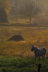 calul balan (=cata=) Tags: cal romania flickraward