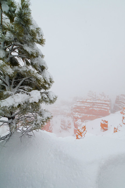 Bryce National Park in the snow-22.jpg