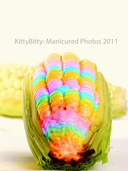 Rainbow Corn 1A/99 (KittyBitty: Manicured Photos) Tags: thanksgiving food white golden healthy rainbow corn raw colours photos farm grain vegetable fresh crop colourful diet cob husk maize isolated staple nutrition nutritious vitamin niblet rainbowcorn yellowphotoshopkitty bittykittybittykittybittymelbourneaustraliamanicuredmanicured
