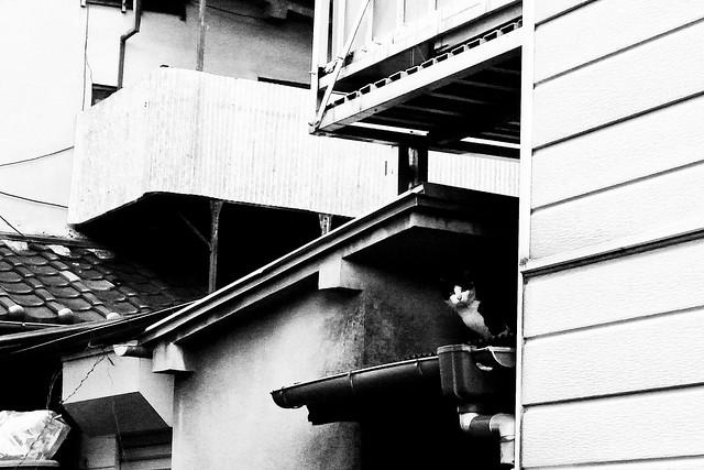 Today's Cat@2011-02-22