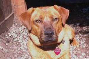 Samwise the dog of Karma Rescue needs a foster home