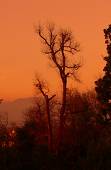 CIMG5484 sunset over the hills of Fagagna (pinktigger) Tags: trees sunset italy orange italia friuli fagagna friul feagne