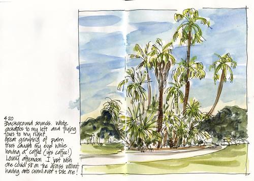 110226_05 Palm Grove