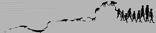Evolution of the Human