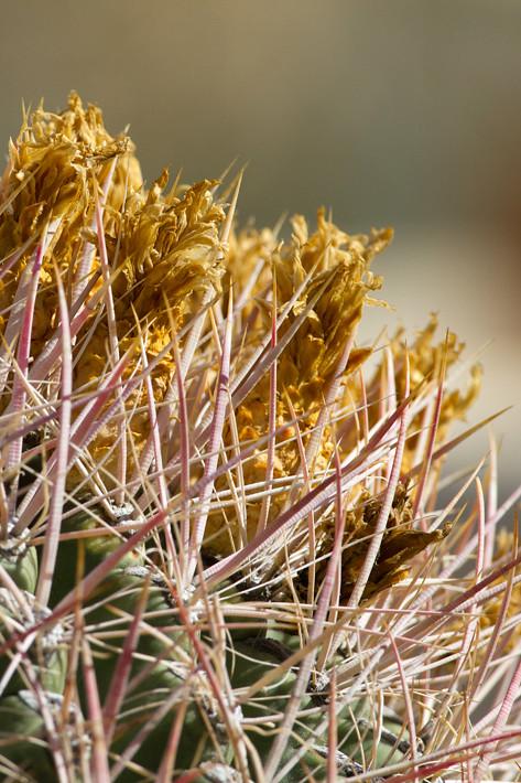 022311_cactus04