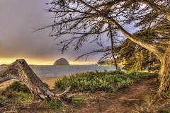 Little Path By The Bay (Didenze) Tags: light sunset sky tree texture warm path stormy morrobay morrorock hdr goldenhour canon450d featuredonadidapcom hdrspotting didenze