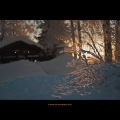 Takk for meg Veslelien! (stella-mia) Tags: morning winter sun snow cold norway forest sunrise lumix frost panasonic 20mm highlight sn morningsun gf1 hightlight dmcgf1 sunnyforest veslelien