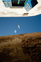 Fly free (flavita.valsani) Tags: blue seagulls white green window birds wall fly vertigo bluesky explore morocco essaouira marroc 149 valsani