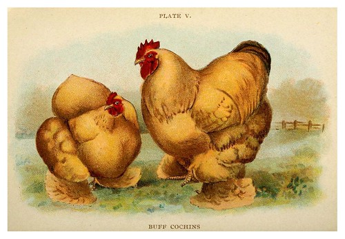 022-Biggle poultry book…1909- Jacob Biggle