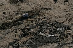 Stilkollektiv_Strukturen Oberflchen Texturen_116 (Stilkollektiv) Tags: strand sand meer wasser holz stein nordsee watt cuxhaven oberflchen texturen strukturen stilkollektiv eckigg