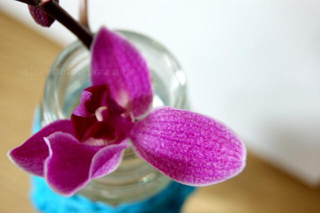 Orchid + crochet