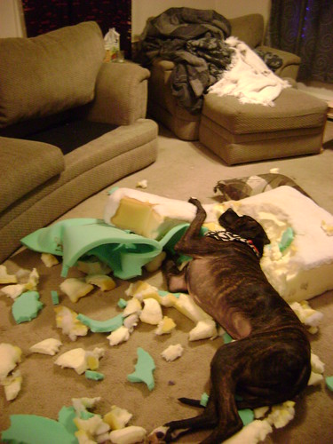 This is what happened to the couch!