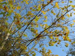 """Efterårsfarver • <a style=""""font-size:0.8em;"""" href=""""http://www.flickr.com/photos/53551333@N05/5525913690/"""" target=""""_blank"""">View on Flickr</a>"""