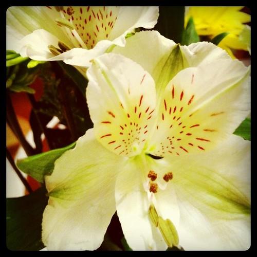 [73/365] Flowers