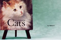 to jj and Tasha (Maha khalid. ) Tags: cats green eye cat eyes frame tasha عين عيون قطه اخضر فرو قطوه بسه هره