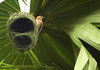 Sweet home (moreechika~) Tags: tree bird home nature nikon nest wildlife yashica bangladesh pakhi pirojpur babui nikond80 yashica300mmmlcf56 shorupkathi necharabad