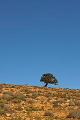 En Route to Mali (geezaweezer) Tags: blue tree desert single lonely mauritania