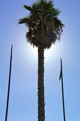 Palmier lampadaire