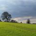 Tree & Field